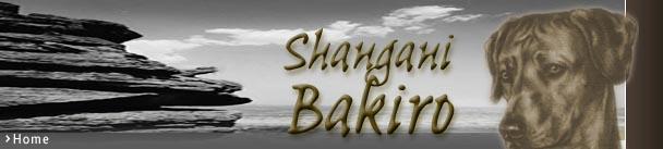 Shangani Bakiro